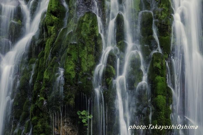 五色ヶ原の森_f0361287_10314311.jpg