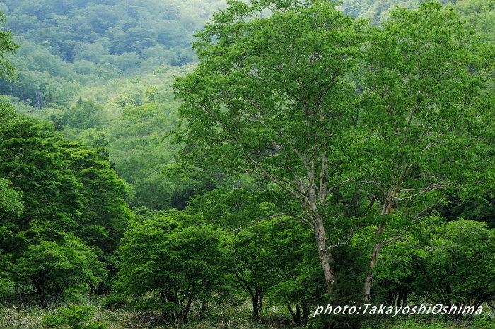 五色ヶ原の森_f0361287_10323668.jpg