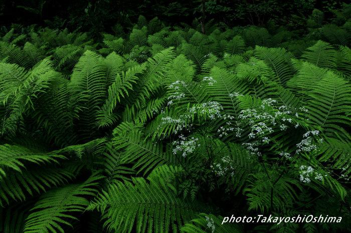 五色ヶ原の森_f0361287_10330897.jpg
