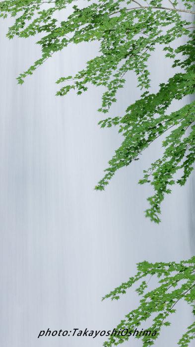 五色ヶ原の森_f0361287_11264872.jpg