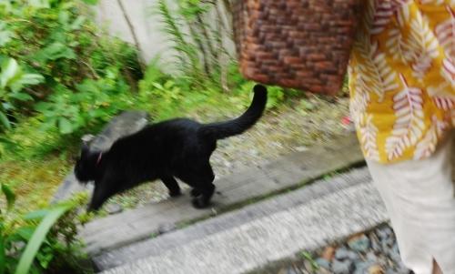 庭に警笛轟く☆_e0167795_16281325.jpg