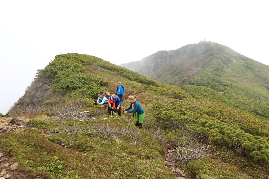 富良野岳、三峰山と上富良野岳、2019.6.24ー同行者からの写真ー_f0138096_23434933.jpg
