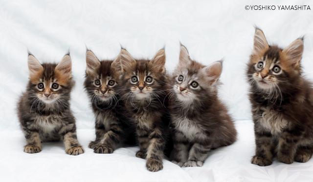 5兄弟。。。_f0031022_20525796.jpg