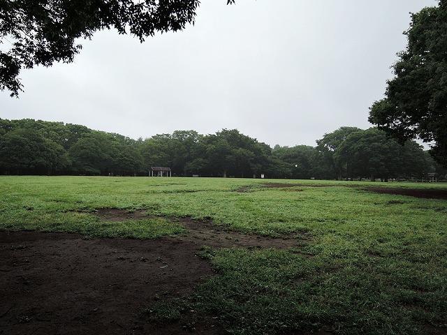 雨の再会_c0062832_15135314.jpg