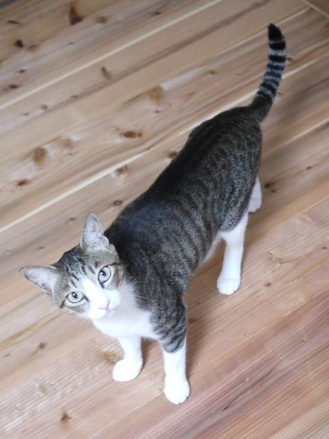 猫のお留守番 たんたんくん編。_a0143140_21073259.jpg