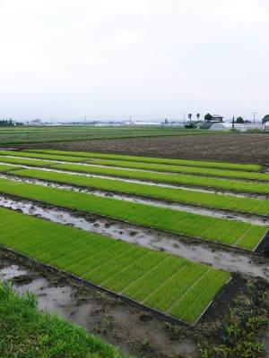 健康農園さんの令和元年の田植えの様子!菊池農業高校生さん達と共に!今年も無農薬栽培で育てます!前編_a0254656_15342929.jpg