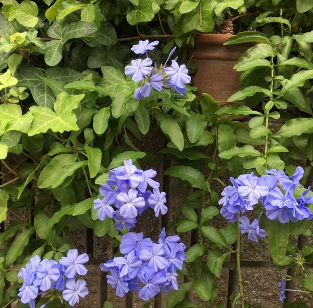 my little garden   好きなお花が次々と_a0165160_14443164.jpg