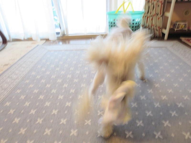 犬の亡霊と顔デカ星人_d0264176_21151538.jpg