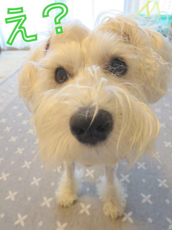 犬の亡霊と顔デカ星人_d0264176_21153609.jpg
