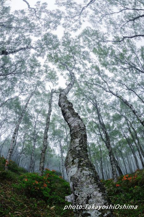 霧時々晴れ時々雷_f0361287_22460677.jpg
