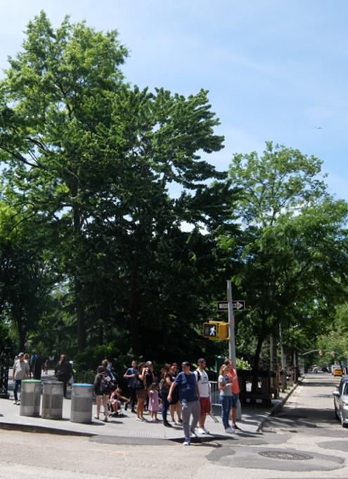 新緑の美しいワシントン・スクエア公園_b0007805_07063615.jpg