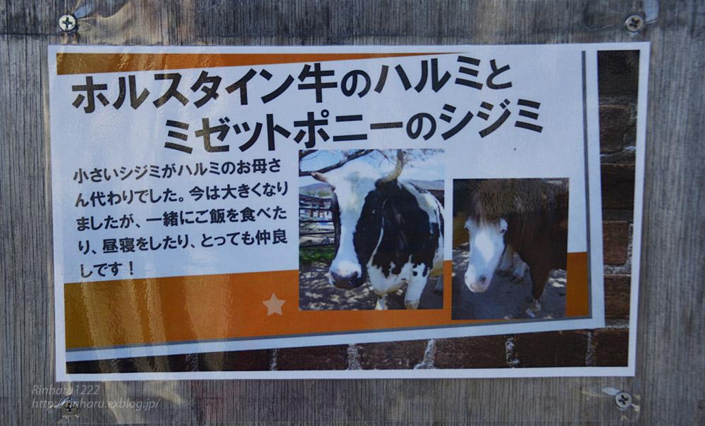 2018.11.18 東北サファリパーク☆ホルスタイン牛のハルミちゃん&ミゼットポニーのシジミちゃん_f0250322_21554991.jpg