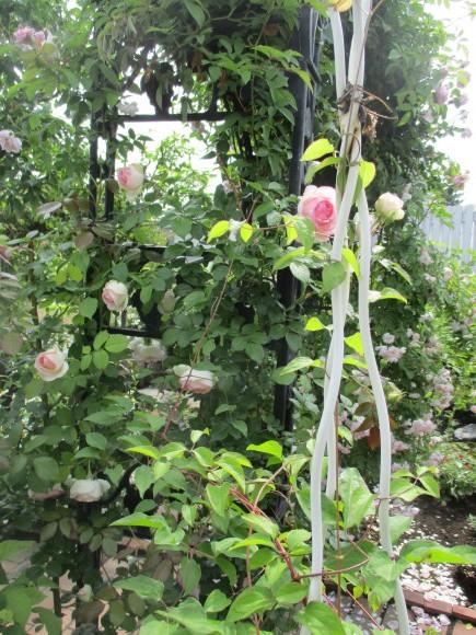 Aからのお土産&お庭の様子&飾ったお花_a0279743_14360433.jpg
