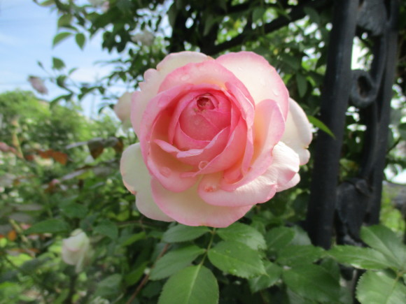 Aからのお土産&お庭の様子&飾ったお花_a0279743_14370988.jpg
