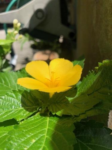 花咲ツアー2019、沖縄、福岡編_e0071652_10504776.jpeg