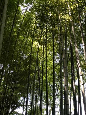 鎌倉あじさい巡り_e0230154_23374451.jpg