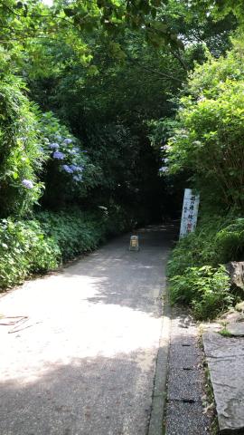 鎌倉あじさい巡り_e0230154_23431884.jpg