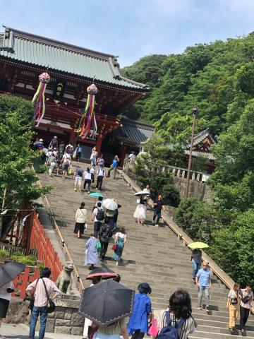 鎌倉あじさい巡り_e0230154_23445366.jpg