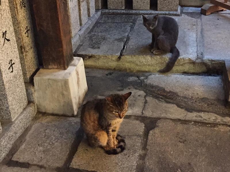 【ねこPhoto】法善寺のネコさんたち_b0008655_23392418.jpg