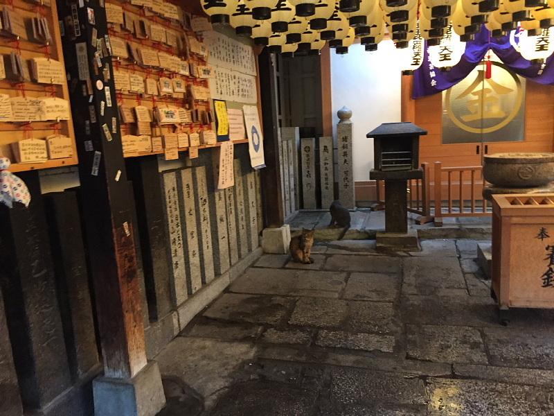 【ねこPhoto】法善寺のネコさんたち_b0008655_23395268.jpg