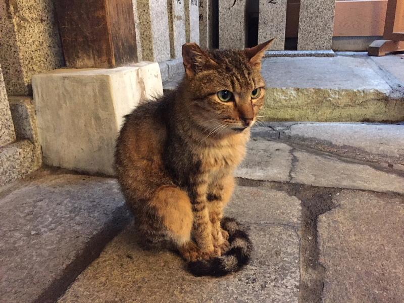 【ねこPhoto】法善寺のネコさんたち_b0008655_23400961.jpg