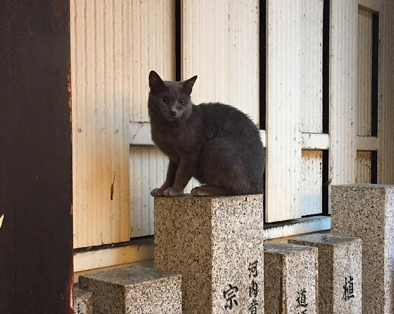 【ねこPhoto】法善寺のネコさんたち_b0008655_23402673.jpeg
