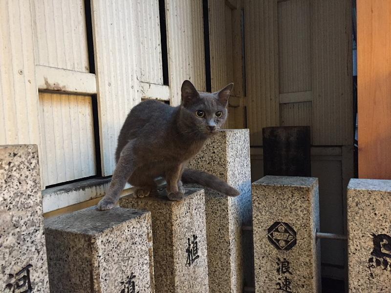 【ねこPhoto】法善寺のネコさんたち_b0008655_23403020.jpg