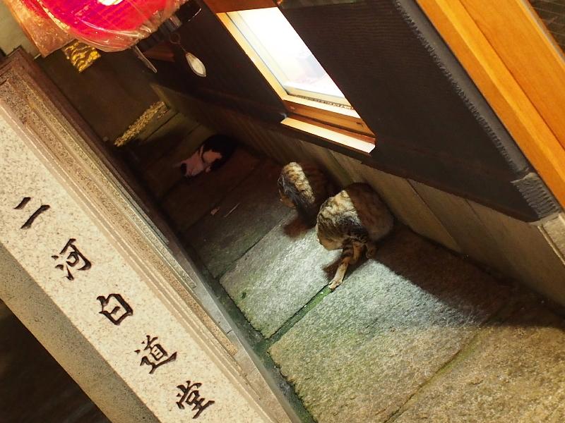 【ねこPhoto】法善寺のネコさんたち_b0008655_23411173.jpg