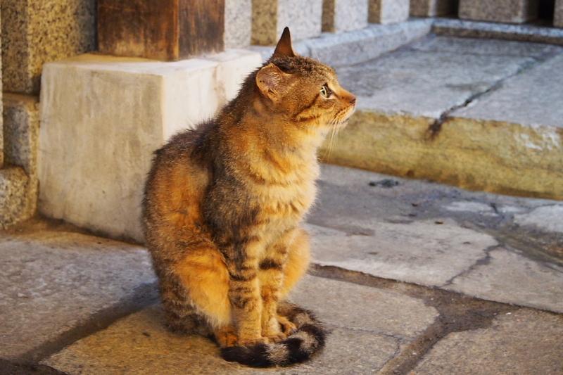 【ねこPhoto】法善寺のネコさんたち_b0008655_23422295.jpg