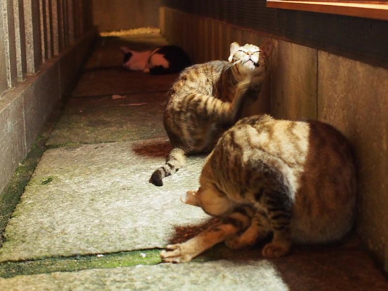 【ねこPhoto】法善寺のネコさんたち_b0008655_23461607.jpg