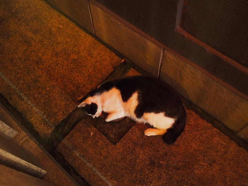 【ねこPhoto】法善寺のネコさんたち_b0008655_23463640.jpg