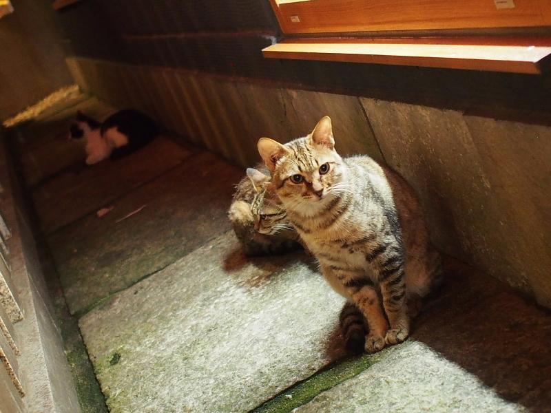 【ねこPhoto】法善寺のネコさんたち_b0008655_23465499.jpg