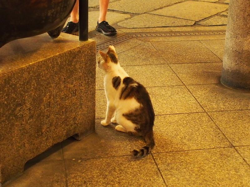 【ねこPhoto】法善寺のネコさんたち_b0008655_23474878.jpg