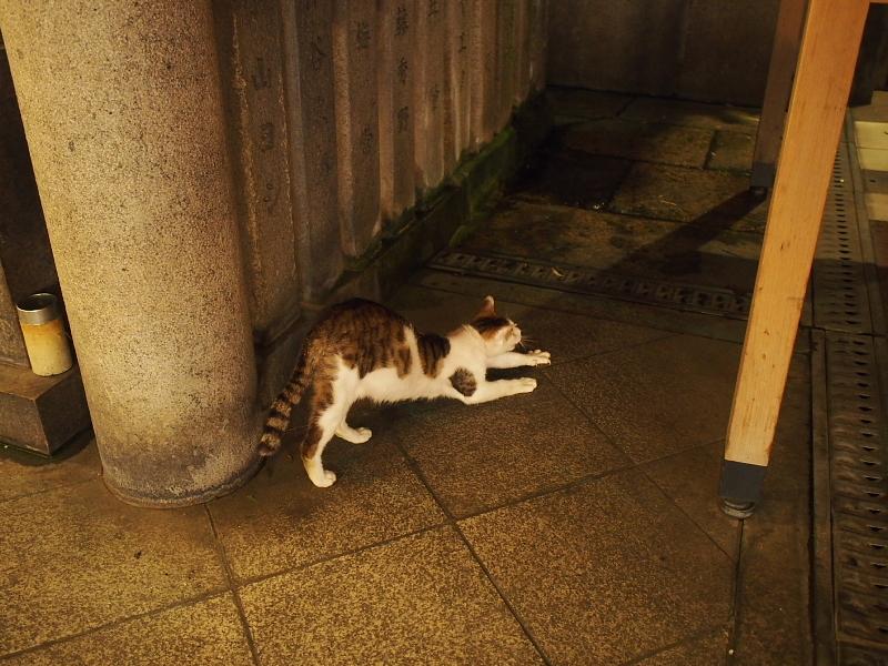 【ねこPhoto】法善寺のネコさんたち_b0008655_23482491.jpg