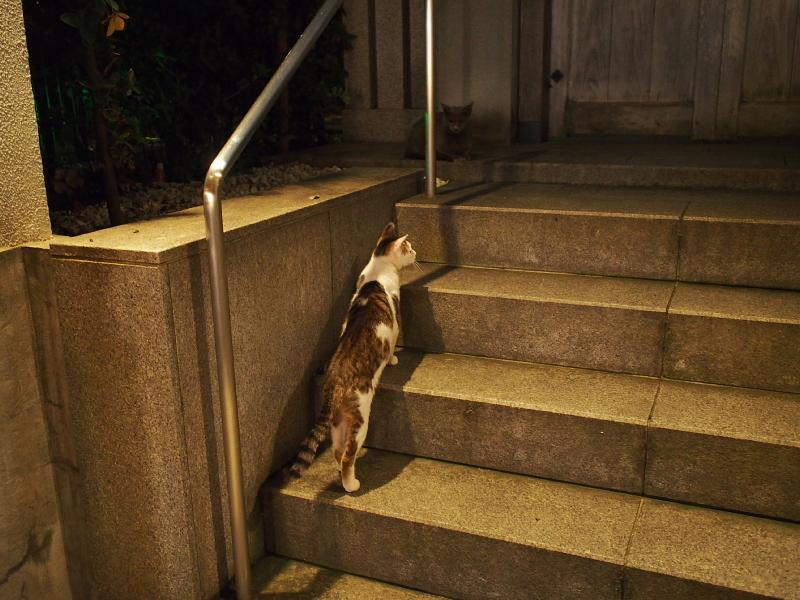【ねこPhoto】法善寺のネコさんたち_b0008655_23484559.jpg