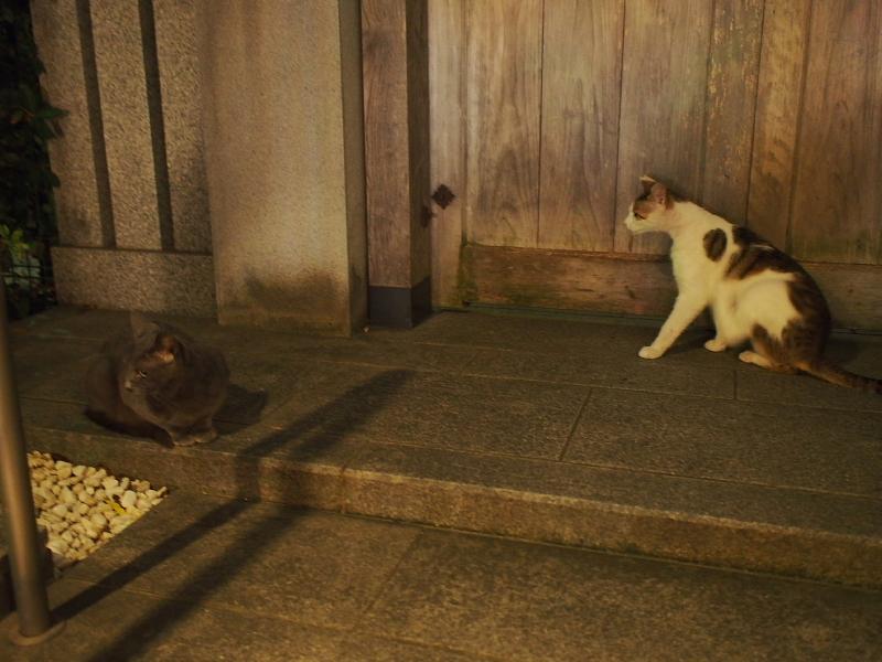 【ねこPhoto】法善寺のネコさんたち_b0008655_23485651.jpg