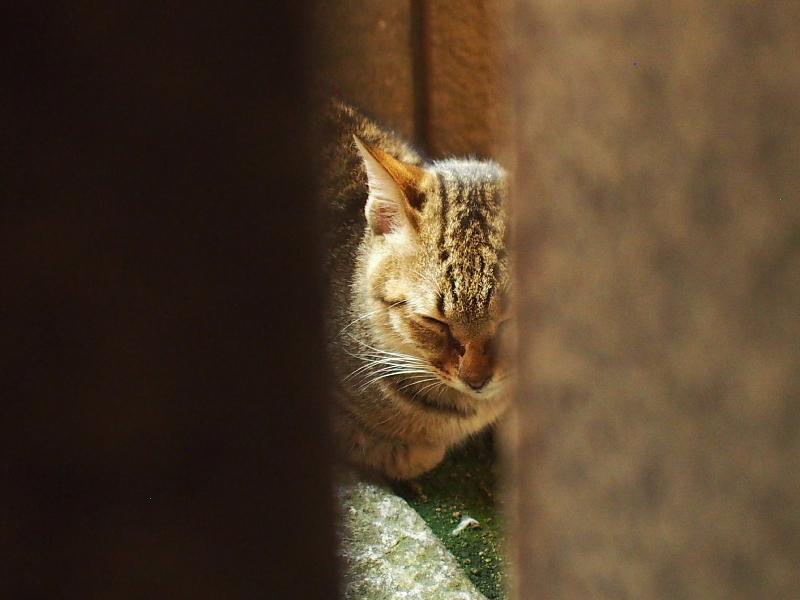 【ねこPhoto】法善寺のネコさんたち_b0008655_23491069.jpg