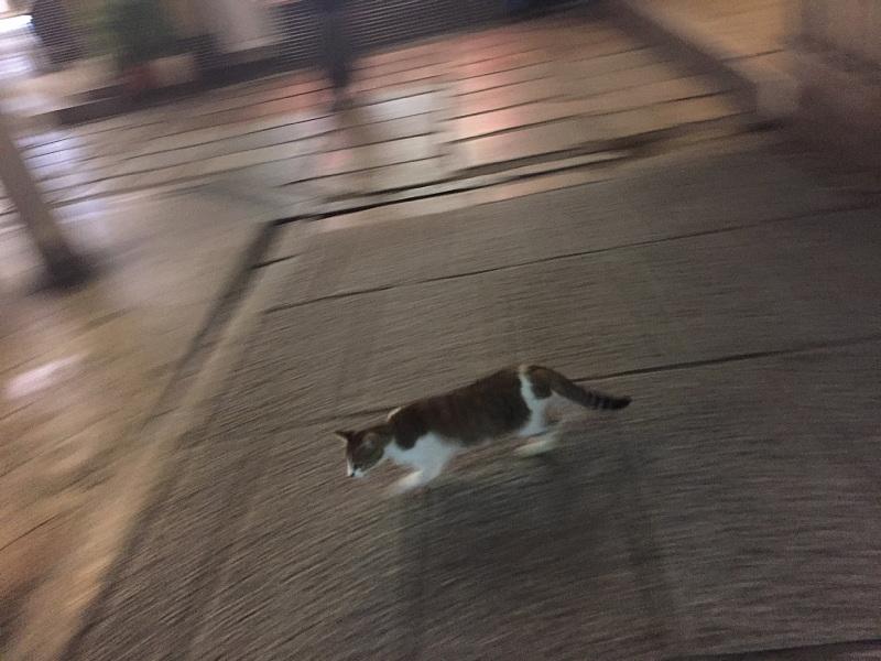 【ねこPhoto】法善寺のネコさんたち_b0008655_23511598.jpg