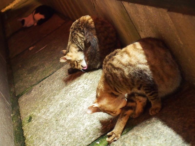 【ねこPhoto】法善寺のネコさんたち_b0008655_23522745.jpg
