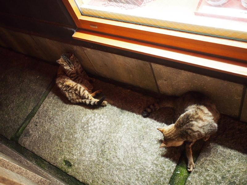 【ねこPhoto】法善寺のネコさんたち_b0008655_23525842.jpg
