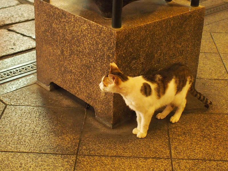 【ねこPhoto】法善寺のネコさんたち_b0008655_23552855.jpg