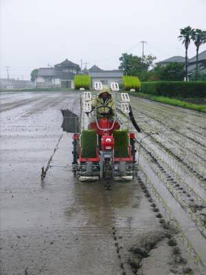 健康農園さんの令和元年の田植えの様子!菊池農業高校生さん達と共に!今年も無農薬栽培で育てます!後編_a0254656_18224571.jpg
