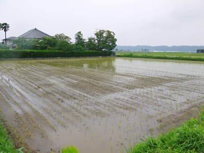 健康農園さんの令和元年の田植えの様子!菊池農業高校生さん達と共に!今年も無農薬栽培で育てます!後編_a0254656_19323332.jpg