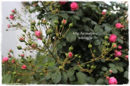 f0338156_21520442.jpg