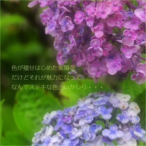 b0154475_21033043.jpg