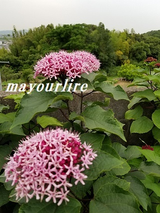 紫陽花の庭_d0169179_23364115.jpg