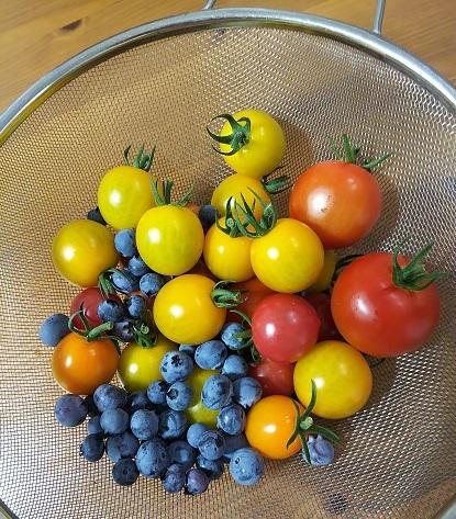 新鮮野菜収穫_d0043390_20064383.jpg