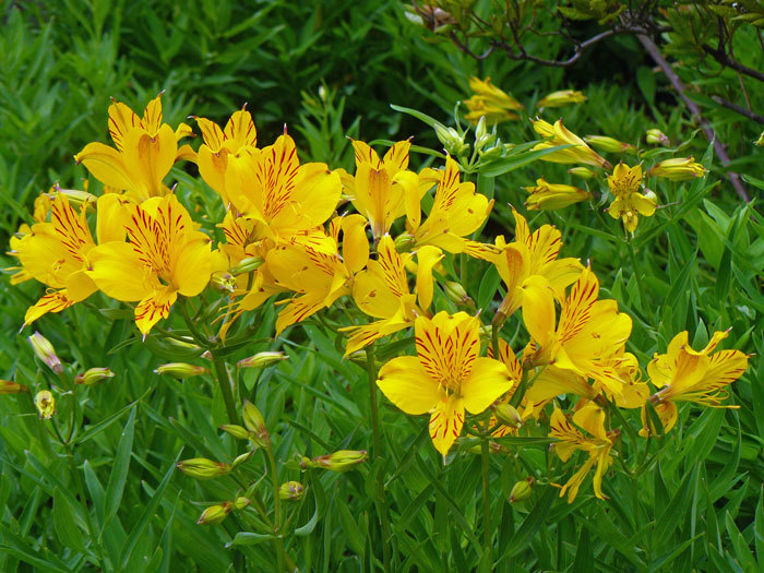 黄色い花_d0162994_13322349.jpg