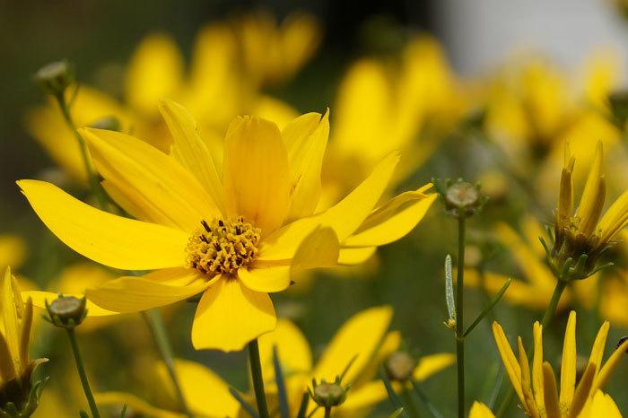 黄色い花_d0162994_13343988.jpg