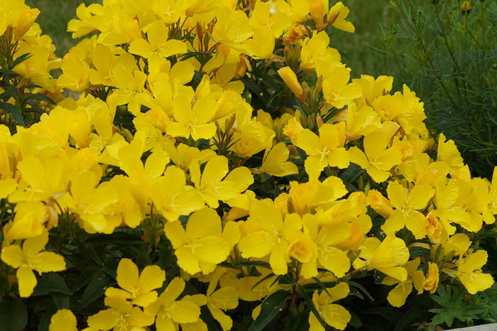 黄色い花_d0162994_13352634.jpg